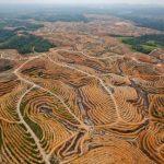 deforestación de árboles