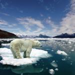 oso polar deshielo