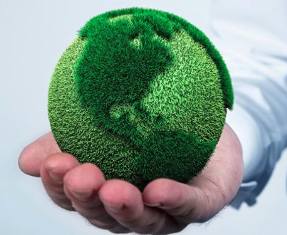 Importancia de la ecología: Los 5 puntos claves