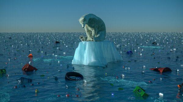 impacto en los animales de la contaminación del mar