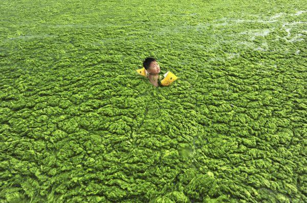 invación algas contaminantes químicos