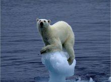 oso último hielo antártida