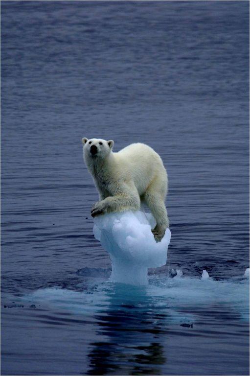 El dramático futuro de la Contaminación Ambiental...