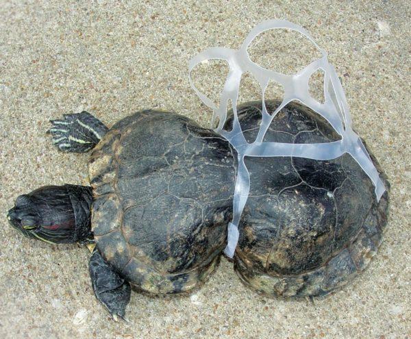 tortuga deformada contaminación