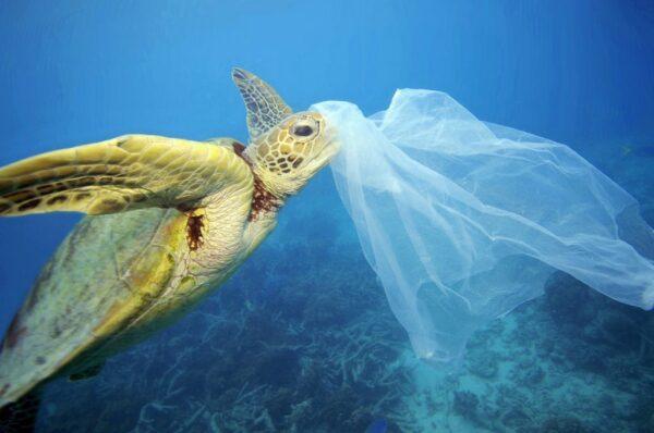 tortuga marina con plásticos en el mar